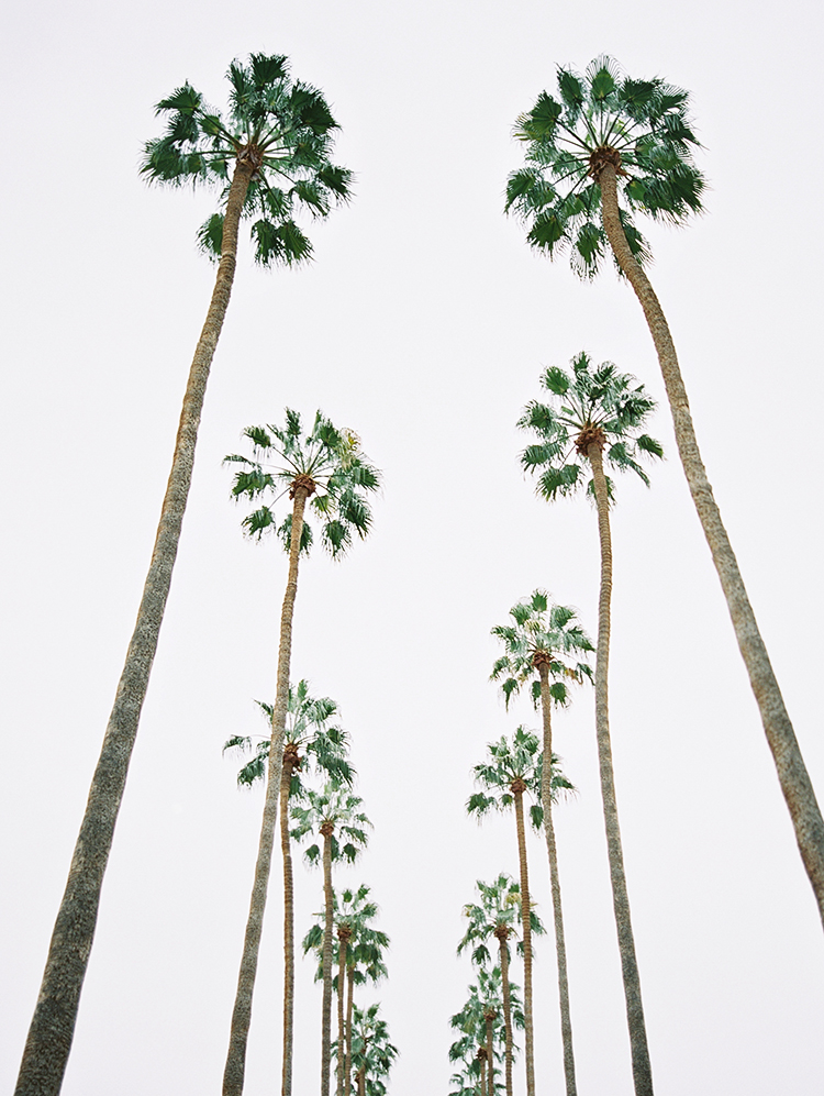 ASU Palm Walk