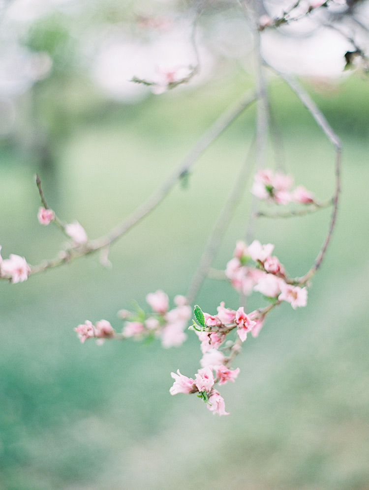 pink blossoming tree branch