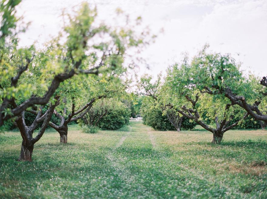 The Farm at Agritopia orchard