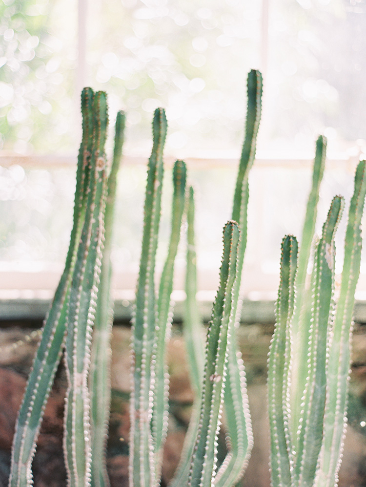 cactus at Boyce Thompson Arboretum