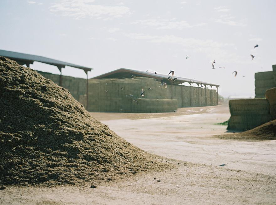 dairy farm in Mesa, Arizona