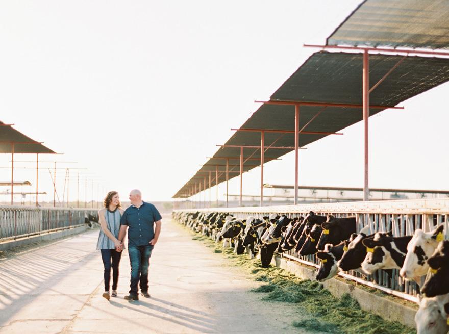 dairy farm engagement photos Mesa, Arizona
