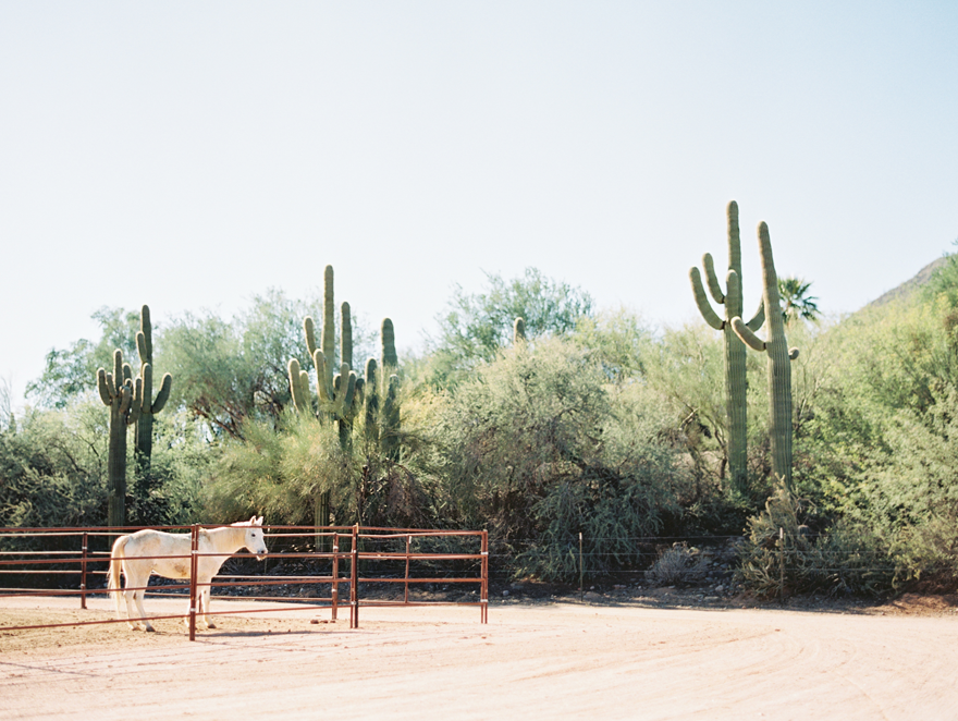 Pale horse on a desert ranch.