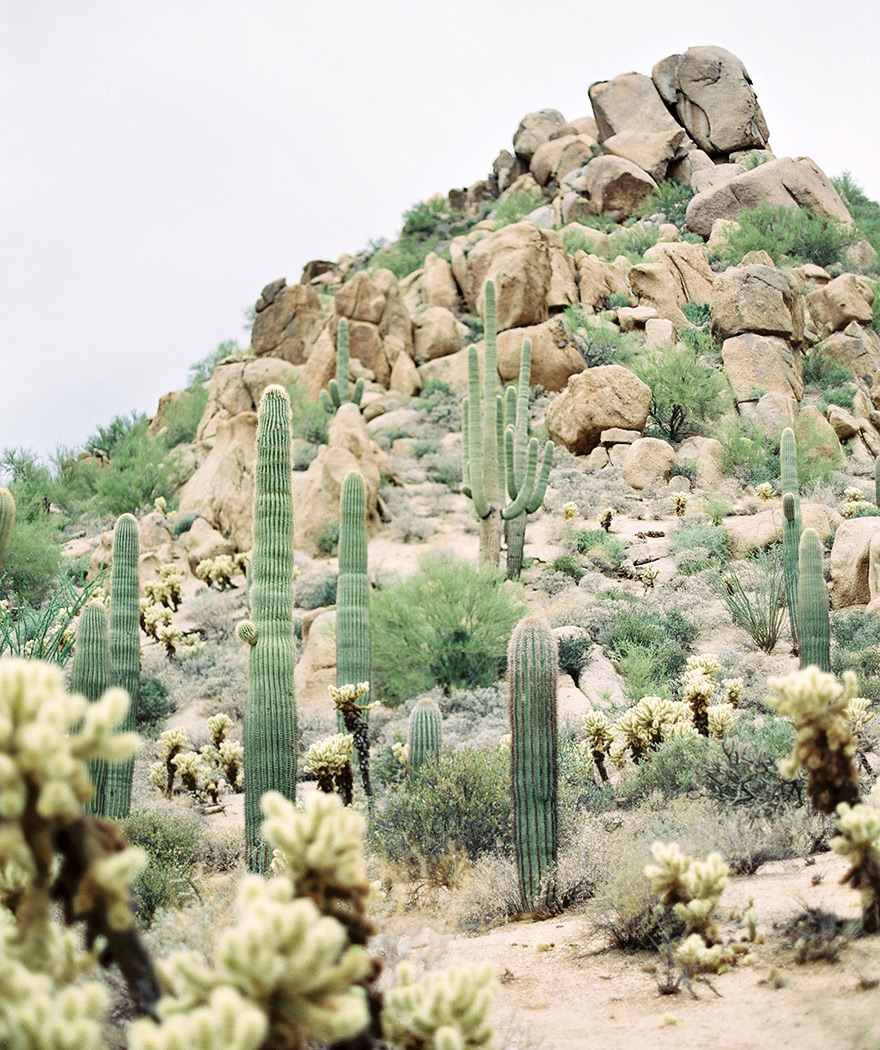 Saguaro cacti and rocks rise to the Arizona sky. Desert landscape.