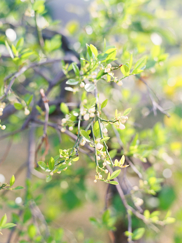 Green leaf branches.