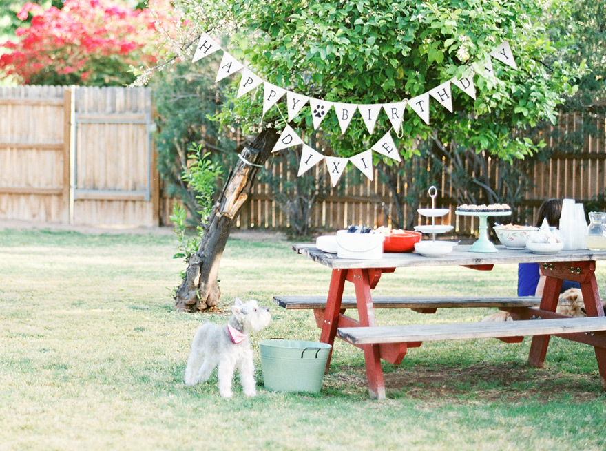 Backyard with puppy's birthday arrangements and food.