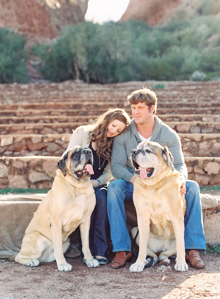 English mastiffs in a Papago Park engagement session
