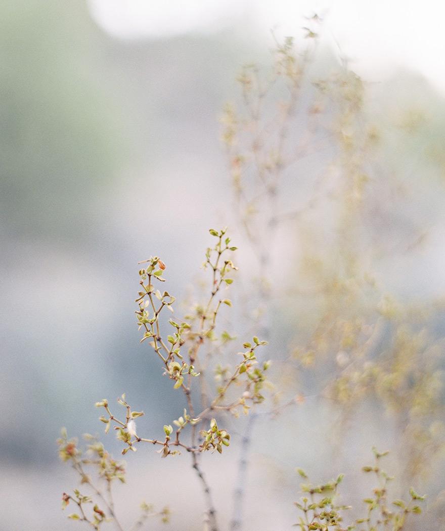 Prickly desert flora