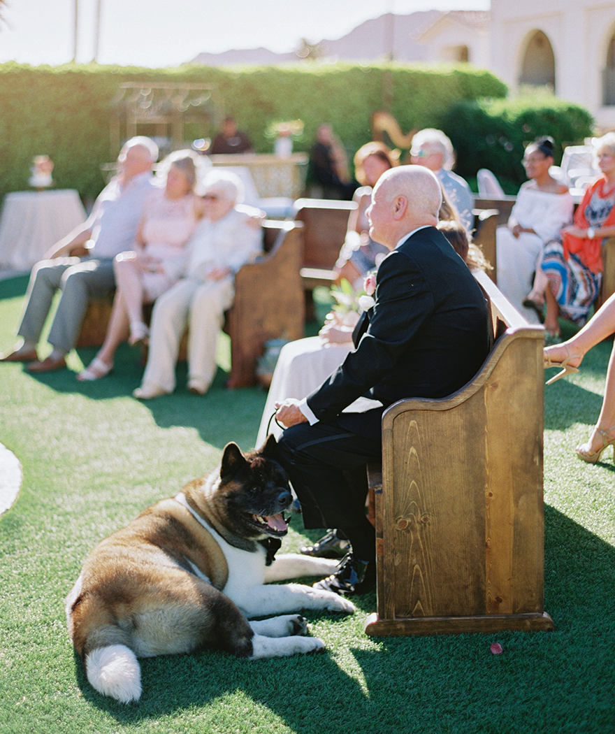Akita at an intimate outdoor wedding
