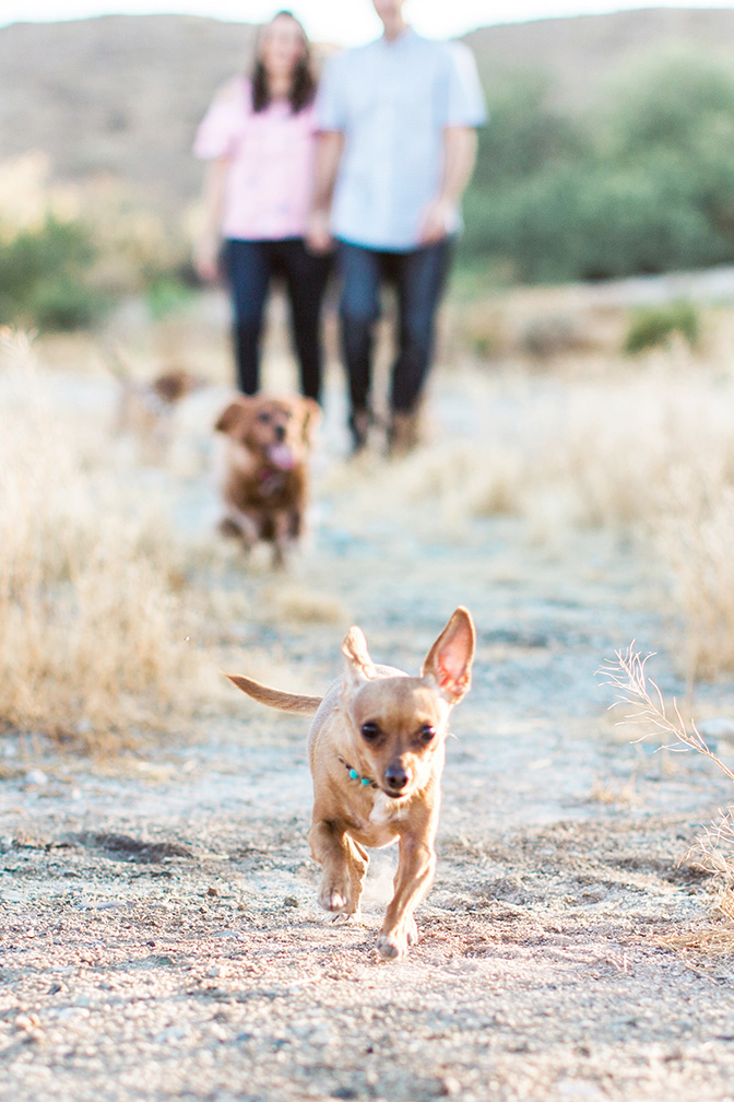 desert engagement shoot with dogs