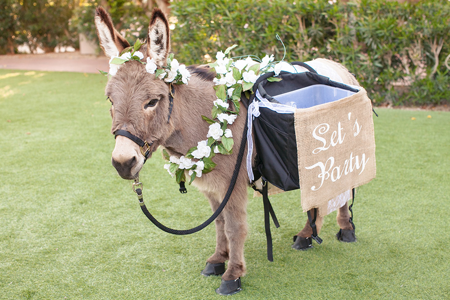 beer burro by Haul N Ass Productions