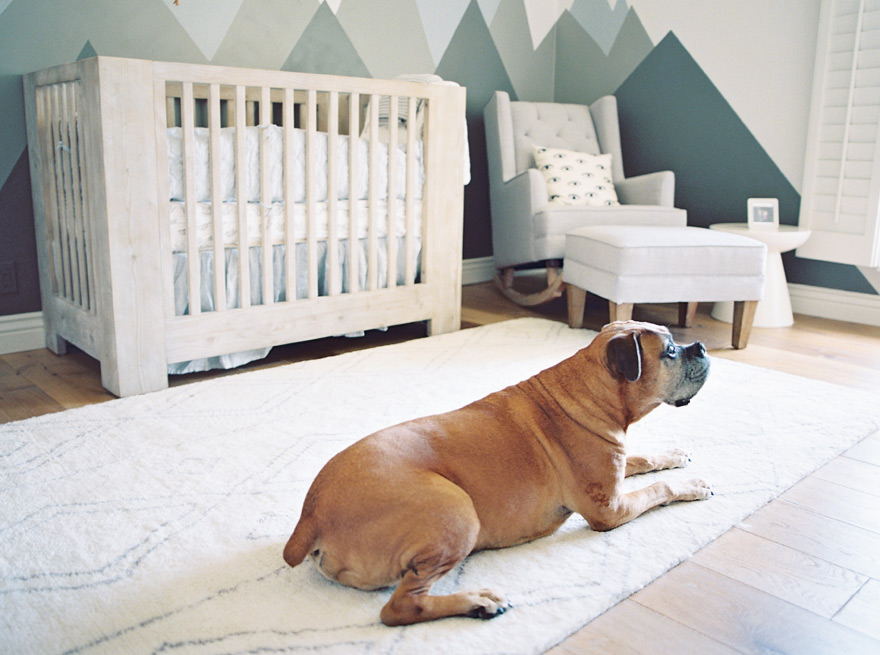 boxer pet in a modern nursery with mountain mural