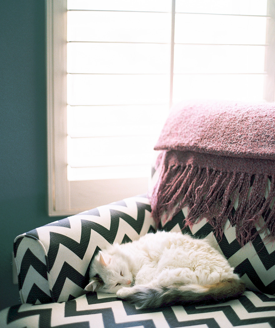 Sleepy cat dozes in a chevron patterned arm chair