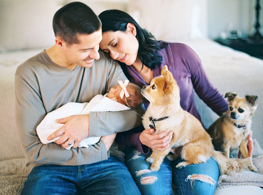 Newborn bedroom photo shoot with snuggled family and dogs.