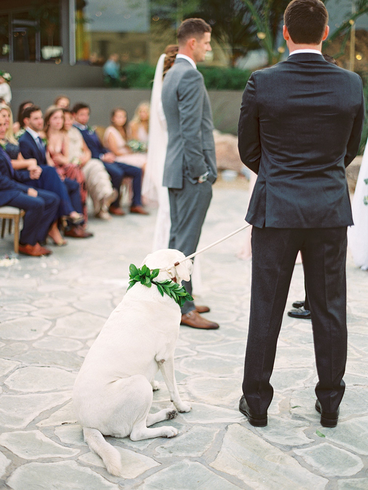 flower-decked dog at the wedding