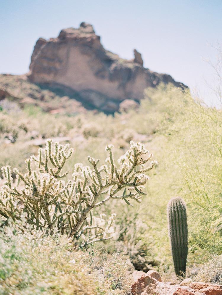 desert cacti in Phoenix, AZ