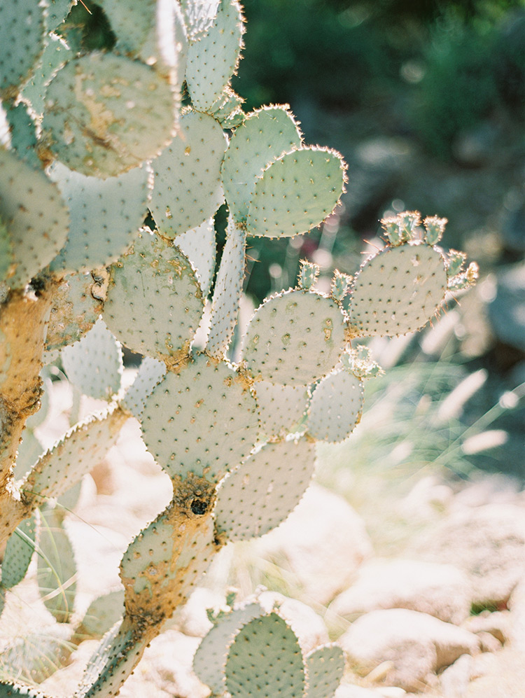 desert cactus at Sanctuary on Camelback