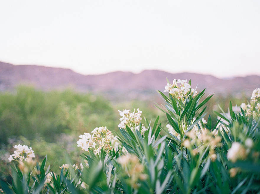 desert flora in Phoenix, AZ