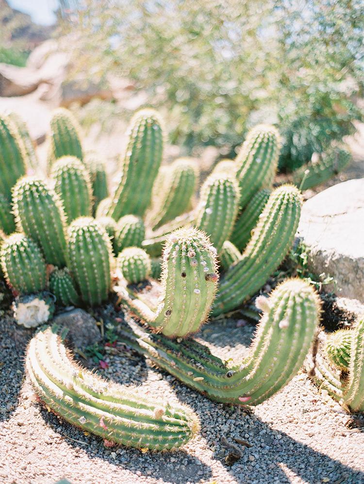 desert cactus in Phoenix, AZ