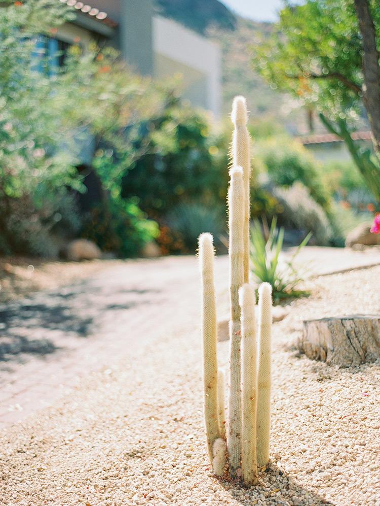 Cactus in Phoenix, AZ