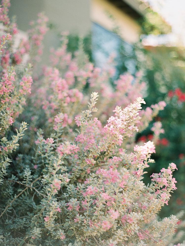 desert flowers in Phoenix, AZ