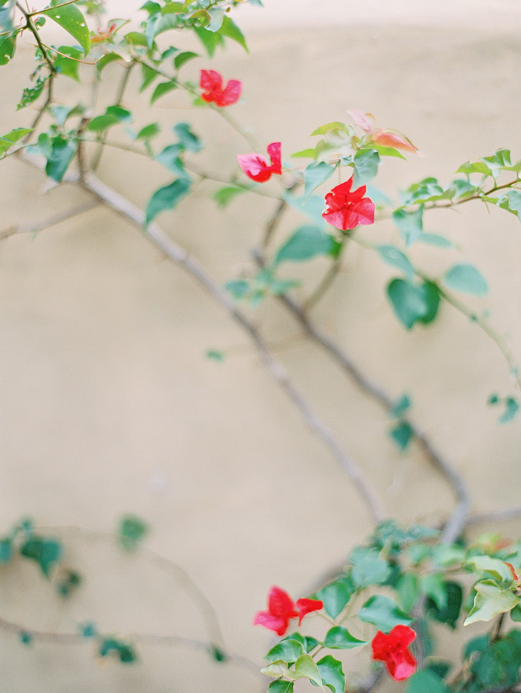 Vibrant bougainvillea against a wall in