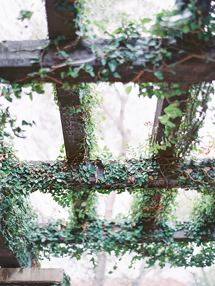 wooden pergola hanging with vines