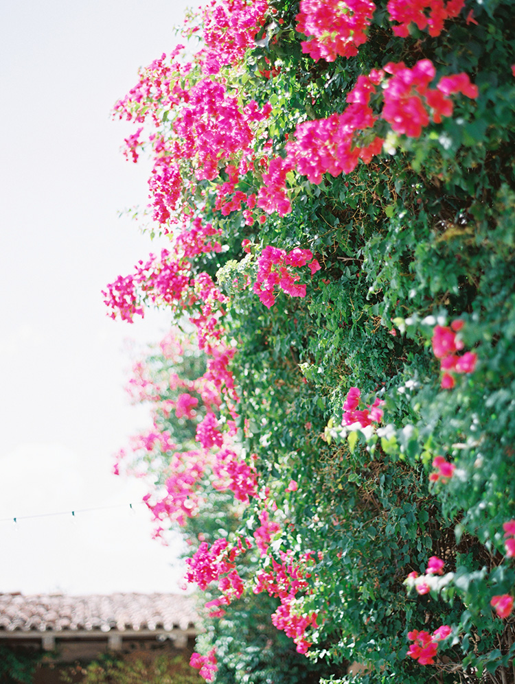 bougainvillea at DC Ranch Country Club