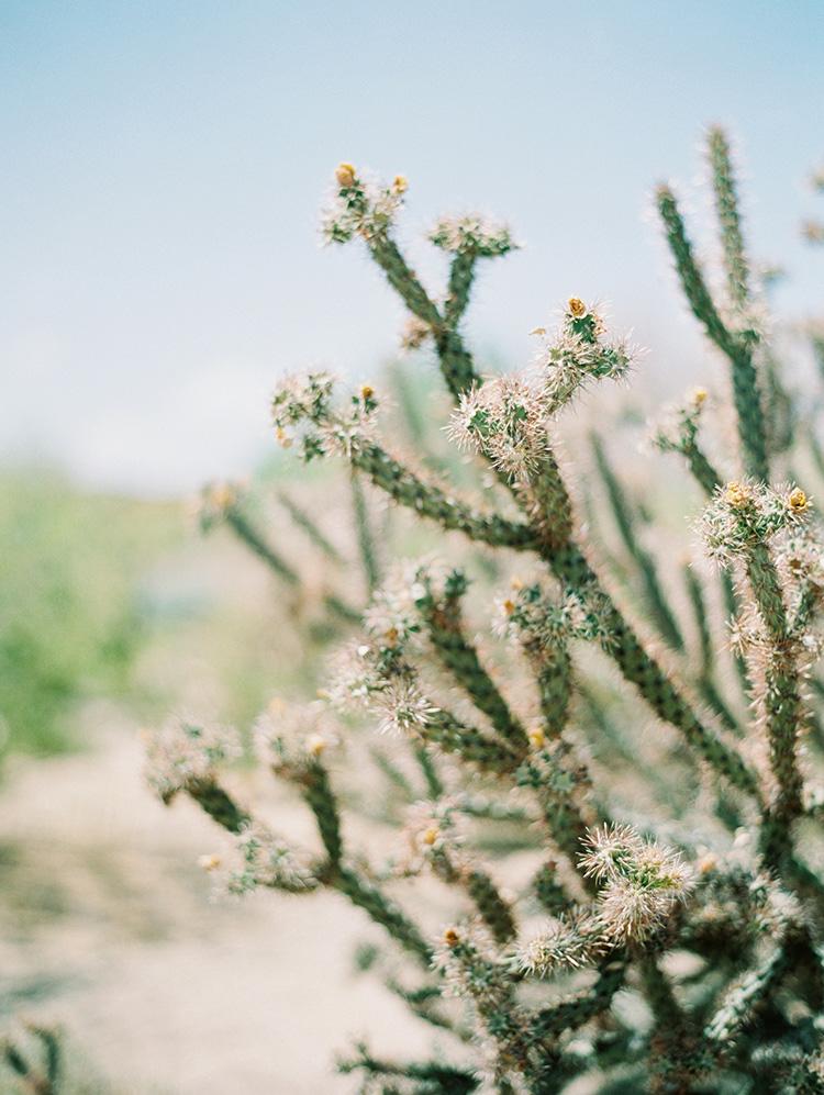 cholla cactus in Phoenix