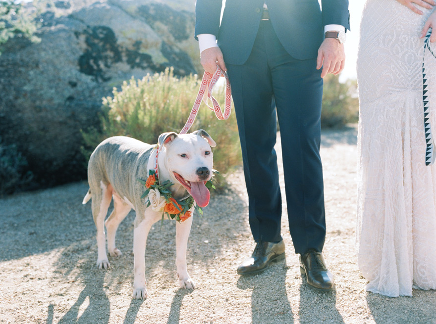 pitbull dog wearing flowers for his humans' wedding