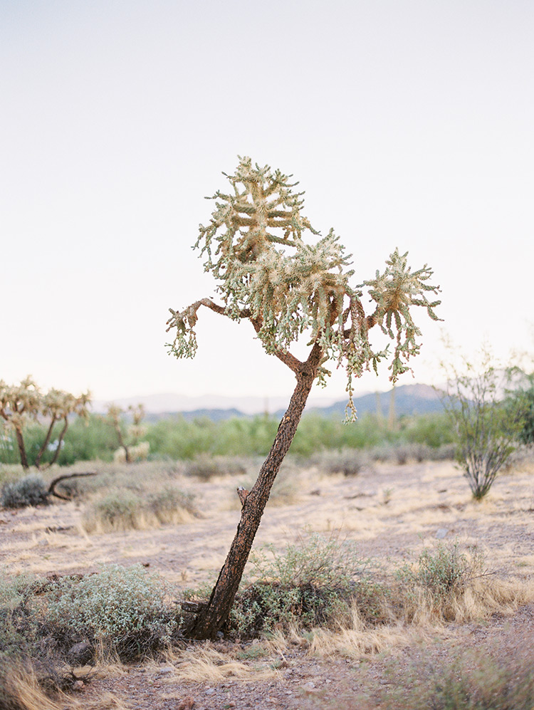 cholla in Lost Dutchman State Park