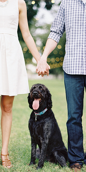How to include your dog in your engagement photos